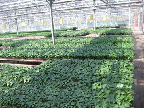 寿光蔬菜产业集团